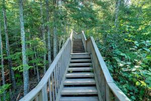 Photo of wooden stairs leading to the Devil's Kettle overlook.