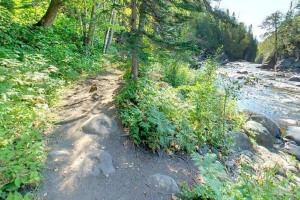 Photo of the Superior Hiking Trail passing through Judge C.R. Magney State Park.