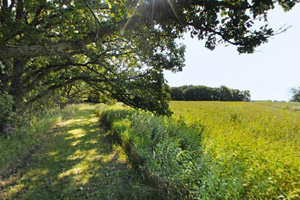 Photo of the Oak Trail, offering both shade and views of the tall grass prairie along this trail.