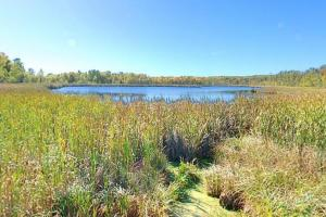 Photo of the sunny tamarack bog at Hidden Lake.