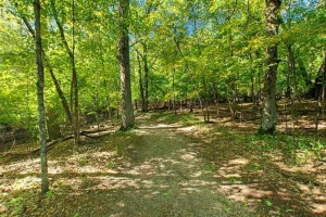 Photo of the interpretive trail winding through the maple-basswood forest.