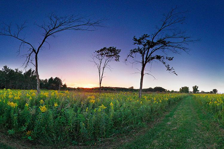 Photo of the Sinkhole Savannas Trail as it passes through native oak savanna and prairie.