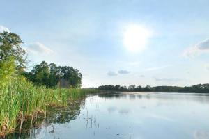 Photo of water grasses growing along the edge of calm Maria Lake.