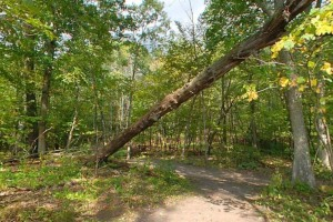 Photo of the densely wooded section of the Big Woods Loop trail.