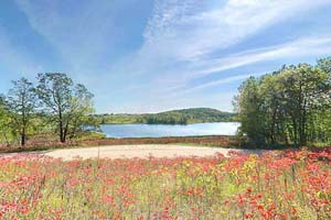 Photo of wildflowers on a hill overlooking Maplewood State Park's Beaver Lake.