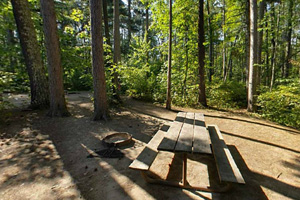 Photo of a wooded campsite and sturdy picnic table in the Far Campground Loop area of the park.