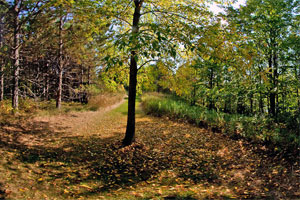 Photo of the west side of Moose Lake State Park's Echo Trail, under a blanket of fallen autumn leaves.