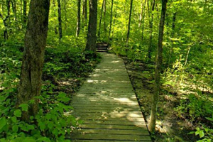 Photo of a boardwalk that features wildflowers, like the endangered Minnesota Dwarf Trout Lily, along the way.