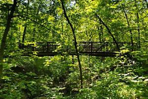 Photo of the bridge spanning the ravine on White Oak Trail.
