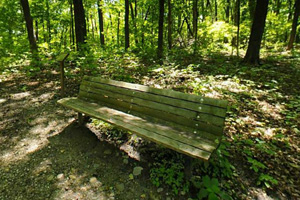 Photo of a visitor bench tucked amongst the trees, a perfect spot to listen to woodland creatures.