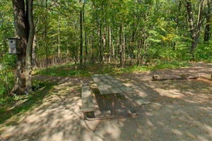 Photo of the rustic and wooded cart-in campsites.
