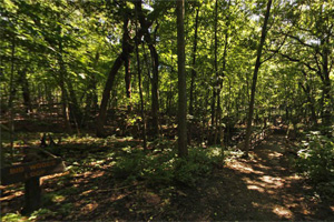 Photo of the Big Woods Trail, winding through shady woodland.