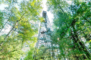 Photo looking straight up at Scenic State Park's fire tower.