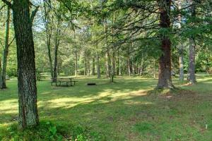 Photo of red and white pines that surround the picnic area.