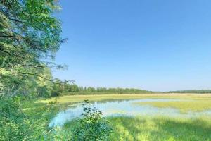 Photo of water grasses in a marshy backwater area of the Mississippi River.