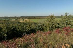 Photo of a diverse forest located at the north valley overlook.