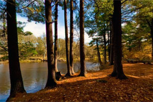 Photo of trees and water on the Riverside Trail at William O'Brien State Park.