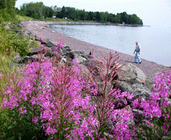 Photo of a man walking along the Lake Superior beach at the Flood Bay state wayside.