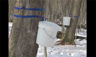 Video: Tap into the Fun of Making Maple Syrup.