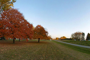 Photo of a park in the City of Dalton, with a pretty scene showing red leafed maples.