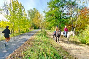 Photo of horses that visitor might encounter when traveling along the trail.