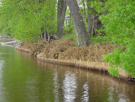 Stabilizing a river shoreline: A cedar log revetment protects the shore from spring flows; the staked biolog protects against boat-generated waves; sediment deposition between biolog and cedar logs create a low terrace to facilitate natural regeneration of vegetation. Photo: Anoka Conservation District