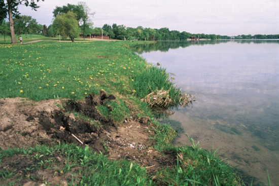 Eroded impoverished shoreline. Photo: Ramsey-Washington Metro Watershed District.