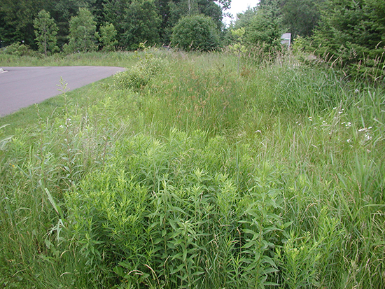 Photo of a mowed filterstrip with linear raingarden.