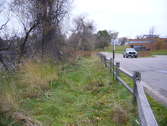 Photo of a sweetgrass filterstrip as shoreline treatment.