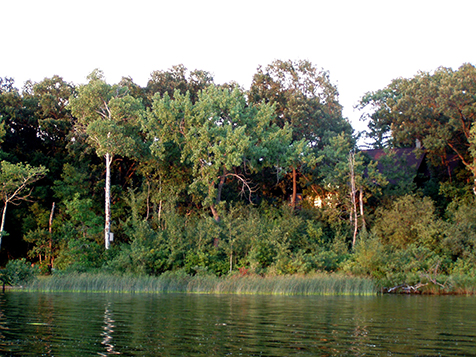 Healthy, wooded shoreline with a structure.