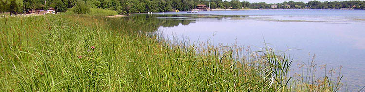 Image of lake shoreline.
