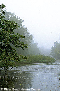 Foggy day on the Cannon River.