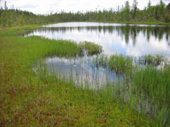 habitat of algae-like pondweed