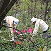 Volunteers placing pink and orange flags on plots.