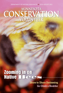 image of cover of Minnesota Conservation Volunteer featuring article on native bee surveys