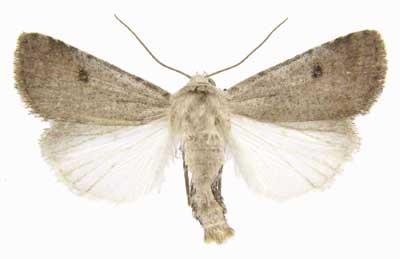 Rare prairie moth.