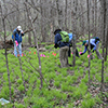 Volunteers placing flags on plots in a forest.