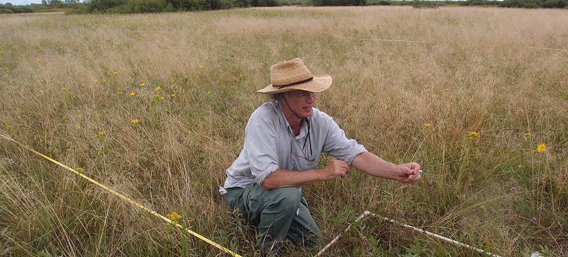 image of a quadrat plot and a plant ecologist assessing plant species abundance