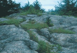 rock outcrop.