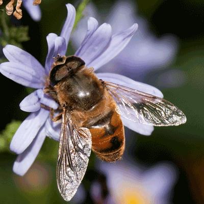 Hummingbirds, Butterflies & Bees - Maryland's Wild Acres