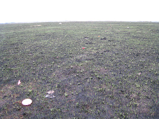transect within burned prairie