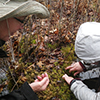 Search for four-toed salamanders
