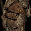 Orthosia hibisci moths on bait