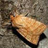 Moth sitting on bark