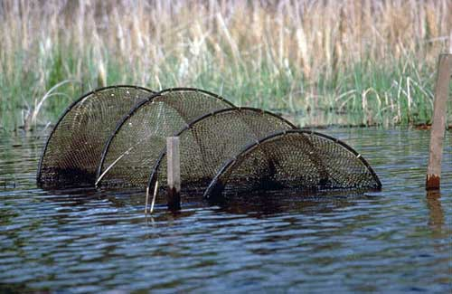a hoop trap for capturing turtles.