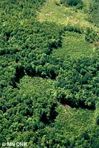 Aerial of managed timber harvest
