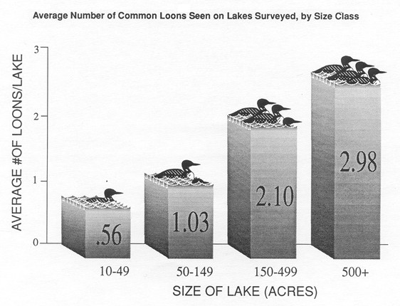 graph of average loons by lake size