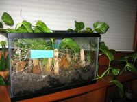 photo of terrarium