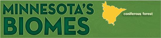 Coniferous forest banner