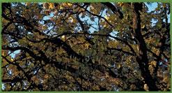 deciduous forest image